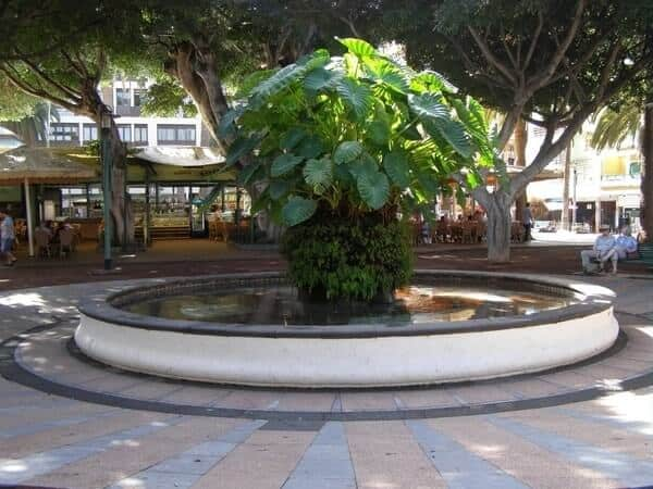 Plaza del Charco in Puerto